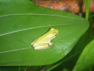 biodiversity-2